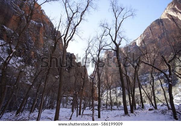 Zion National Park, Utah Frosty Snowy Trees in Wintertime
