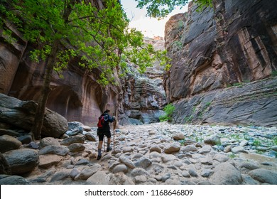 ZION NATIONAL PARK, UTAH/USA 6/13/18: Young female backpacker with hiking poles hiking the Narrows trail of Zion.