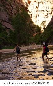 ZION, UTAH - SEP 26, 2013 - Hikers wade across the Virgin River, Zion National Park, Utah