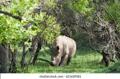 Ziwa Rhino Sanctuary Uganda