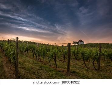 Zlati gric vineyard in Slovenia on summer morning - Shutterstock ID 1893018322