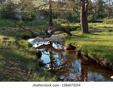 Zlatibor Mountain, Serbia; May, 16. 2018. A beautiful young woman with a red hat rests in the shade on a curved tree above the cold stream.