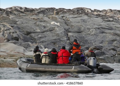 zodiac with people watching a polar bear on the shore