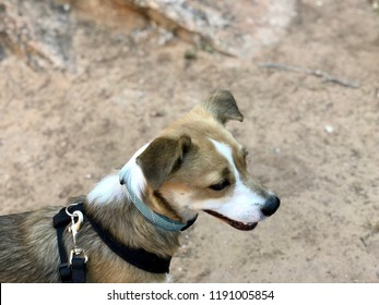 Zoey Yawns at the Mica Mines in Colorado