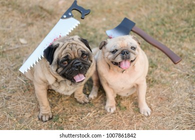 Zombie pug dog.(Funny Pug dog playing with halloween costume.)