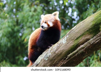 Zoology and animals, pretty firefox