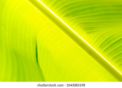 zoom in to banan leaf