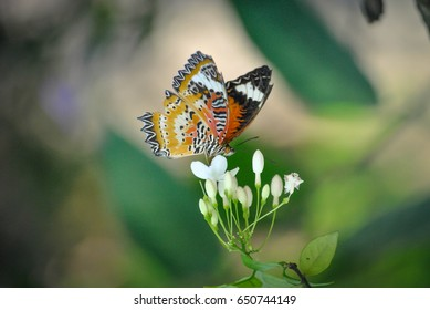 Zoom lens, with butterfly and white flower, Thailand.