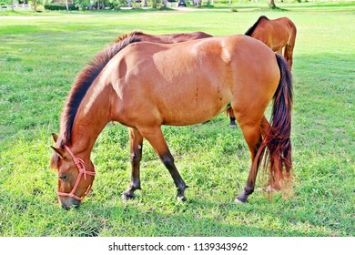 Zoomed to healthy horse who eats grasses in the green field