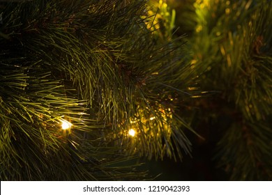 Zoomed View of Lights of Christmas Tree at Evening