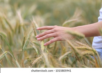 Zoomed in view of a young woman's thin fingers holding a ripe ear of organic vegetarian wheat standing in the countryside