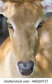 The zoom-in picture of deer in the zoo.