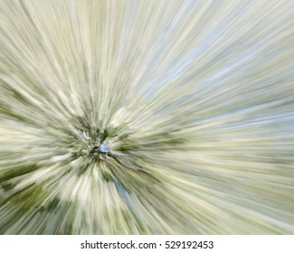 Zooming in on a Hawthorn tree covered in white blossom taken using a long exposure.