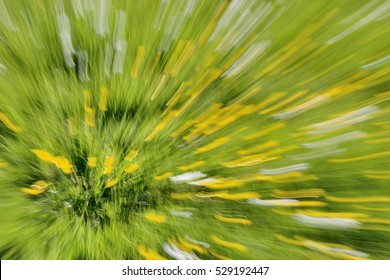 Zooming in on yellow buttercups in a field taken with a long exposure.
