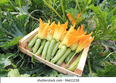 zucchini basket with flowers in green garden