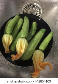 The zucchini or courgette with flowers
