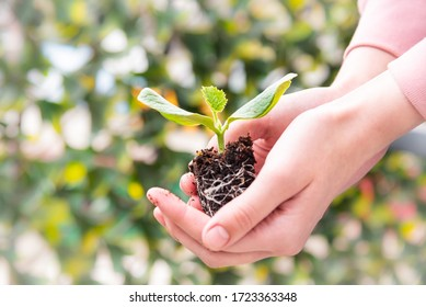 Zucchini seedling held in girl's hands with green leafy blurred background