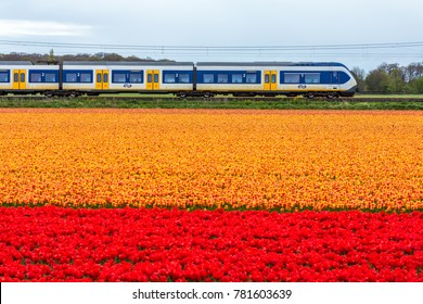 Zuid Holland, the Netherlands - 23 April 2017: Dutch electric sprinter train passing flower fields