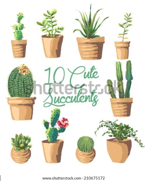 10 Cute succulents vector graphic set