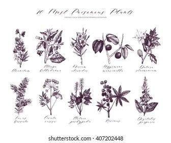 10 Vector Most Poisonous Plants Collection. Botanical hand drawn illustration. Vintage noxious plants sketch set isolated on white.