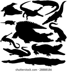 11 pieces of detailed vectoral crocodile silhouettes.