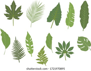 12 green graphic tropical leaves, isolated and Vectorized.