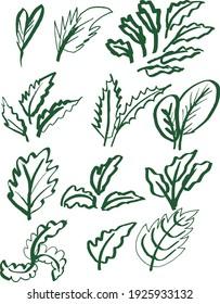 12 Green Leaf Set Design Elements Isolated Vector Illustration. Doodle Leaf Set.