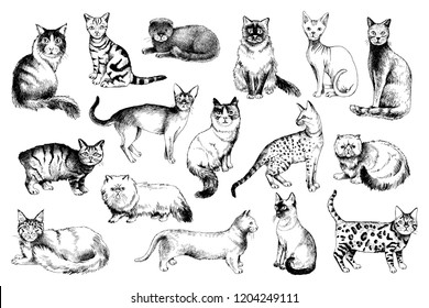 16 hand drawn black and white cat breeds. Vector illustration