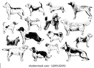 16 high quality hand drawn breeds of dogs. Vector illustration