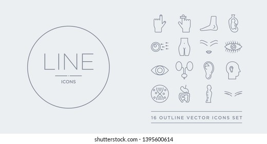 16 line vector icons set such as closed eyes with lashes and brows, column inside a male human body in side view, digestive system, dna, ear contains ear lobe side view, excretory system, eye