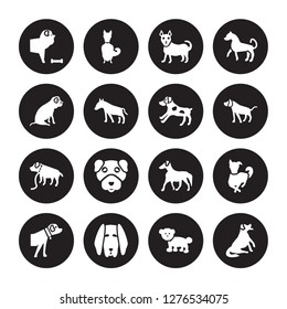 16 vector icon set : Chow dog, Bichon Frise Bloodhound Boerboel Border Collie Bernese Mountain Bulldog, Boxer Brittany dog isolated on black background