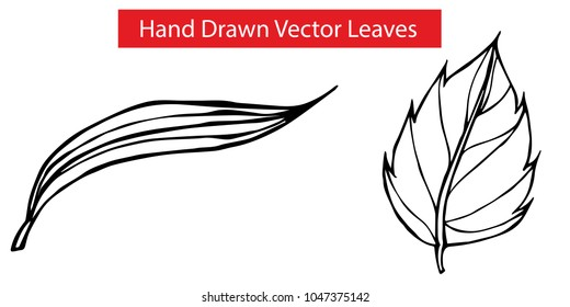 2 Detailed Elements Hand Drawn Vector Leaves with Long and Rose Leaf Flora Natural Nature Organic Set. Graphic Design Resource, Vector Illustration