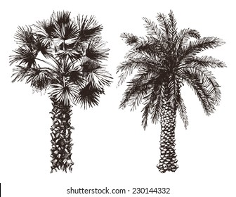 2 hand drawn palm trees in retro style