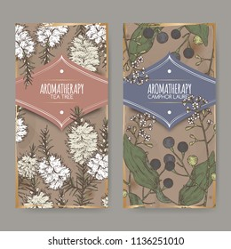 2 labels with tea tree and camphorwood branch color sketch on vintage background. Great for traditional medicine, perfume design, cooking or gardening.