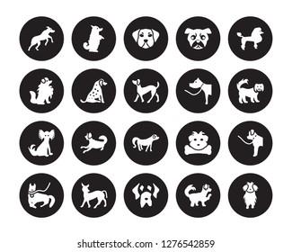20 vector icon set : Rhodesian Ridgeback dog, Maltipoo Mastiff Mexican Hairless Dog Mudi Poodle dog isolated on black background