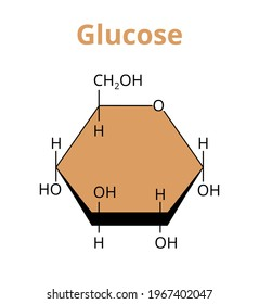 2D vector molecular structure of the monosaccharide glucose, simple sugar, the most abundant carbohydrate made by plants. The structural formula of ᴅ-Glucose, α-d-glucopyranose isolated on white.