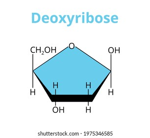 2D vector molecular structure of the monosaccharide deoxyribose, deoxy sugar, carbohydrate. The structural formula of 2-deoxyribose isolated on white. Component of DNA, precursor to the nucleic acid.
