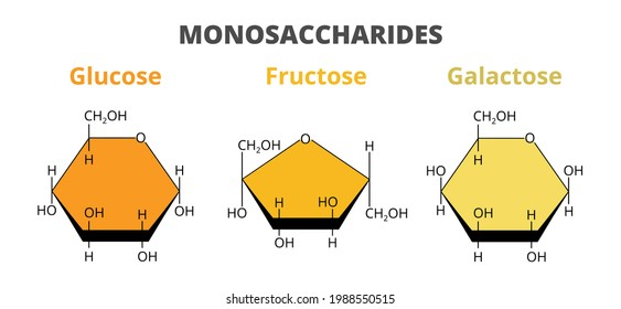 2D vector set, the molecular structure of the dietary monosaccharides – glucose, fructose, galactose molecules isolated on white background. Monosaccharides, simple sugars, monomers of carbohydrates.