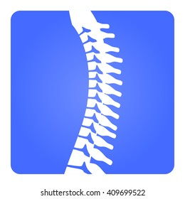2D Vector Spinal column Musculoskeletal Image with Rounded Rectangle on White Background