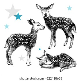 3 hand drawn baby deers in vintage style isolated on white background