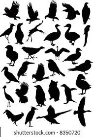 37 Birds silhouettes vector