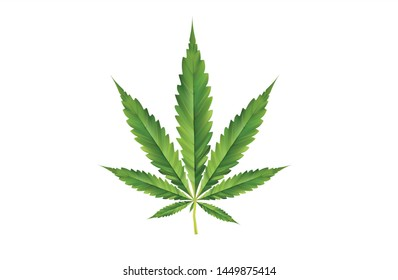 3d illustration marijuana leaves thailand can stock vector royalty free 1449875414 shutterstock