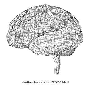 3D outline brain. Vector rendering of 3d. Wire-frame style. The layers of visible and invisible lines are separated