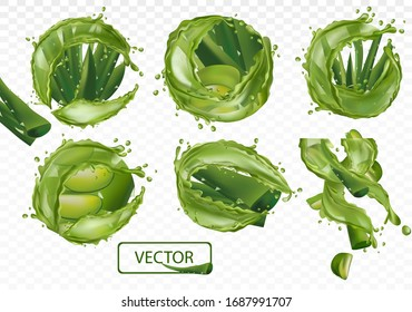 3D realistic fresh aloe vera on transparent background. Collection green aloe vera with splash liquid. Slice Aloe. Herbal medicine for skin care and hair. Aloe vera a cactus closeup. EPS 10.