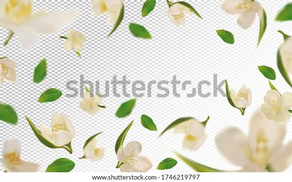 3D realistic jasmine with green leaf. White jasmine flower in motion. Beautiful jasmine background. Falling flower jasmine. Vector illustration. Vector illustration.