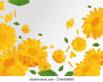 3D realistic marigold with green leaf. Yellow calendula flower in motion. Beautiful marigold background. Calendula close up. Falling flower calendula.Vector illustration