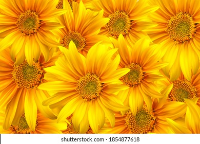 3D realistic sunflower flower background. Yellow sunflower in motion. Beautiful sunflower background. Sunflower flower seamless background. High quality vector illustration. EPS 10