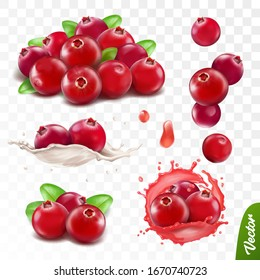 3d realistic transparent isolated vector set, cranberry with leaves, cranberry in a splash of juice with drops, cranberries in a splash of milk or yogurt