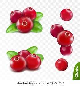3d realistic vector berries set, fresh cranberry fruit with leaves isolated