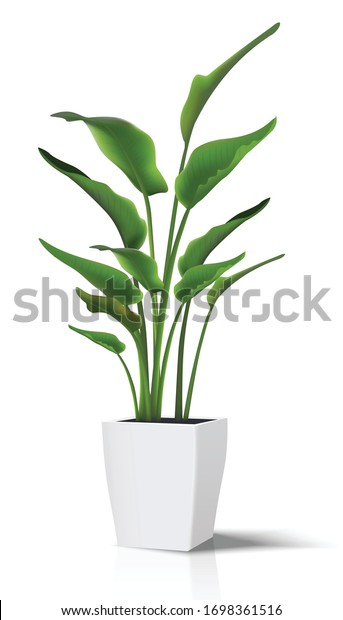 3d realistic vector floor house green plant. Isolated on white illustration icon in white pot..
